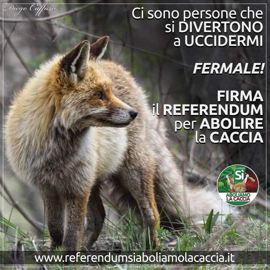 Firma online il referendum per l'abolizione della caccia entro il 20 ottobre!
